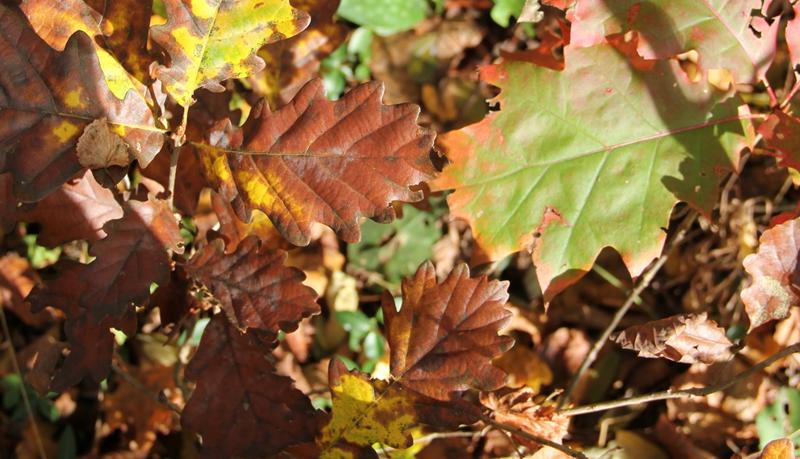 1. Gorenjska regijska delavnica o tujerodnih drevesnih vrstah