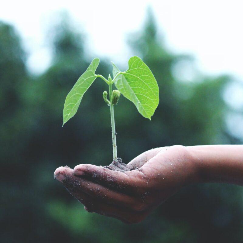 Spletno predavanje Od semena do semena